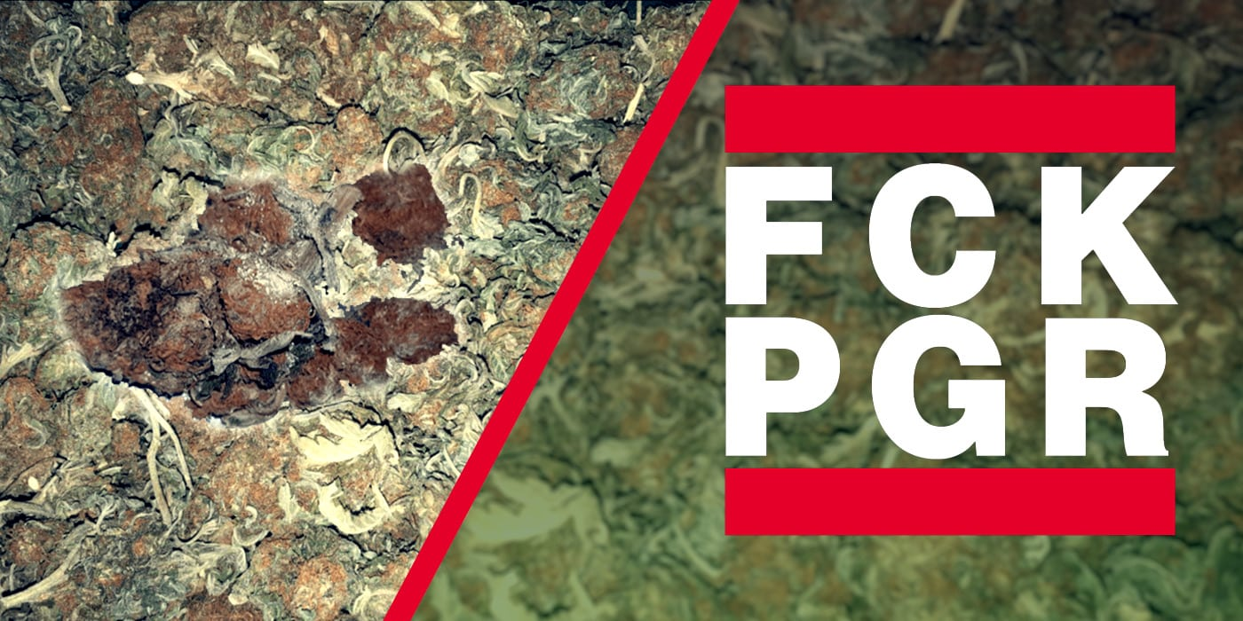 Pgr The Toxic Chemicals In Your Marijuana Friendly Aussie Buds