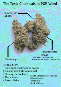 PGR: The Toxic Chemicals in Your Marijuana - Friendly Aussie