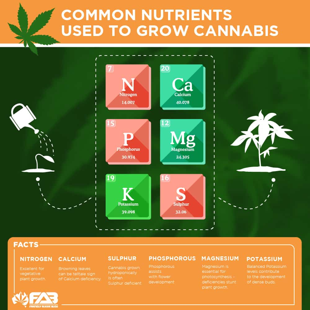 nutrients nutrition graphic