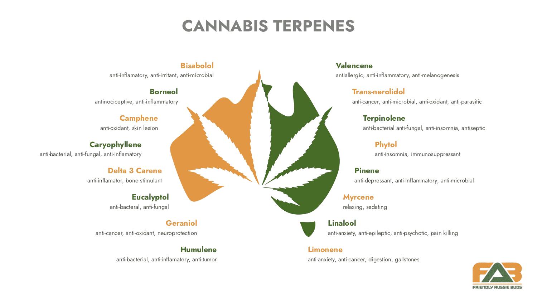 terpenoids